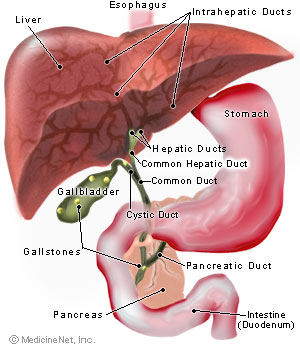 Gall Bladder Common Bile Duct Stones